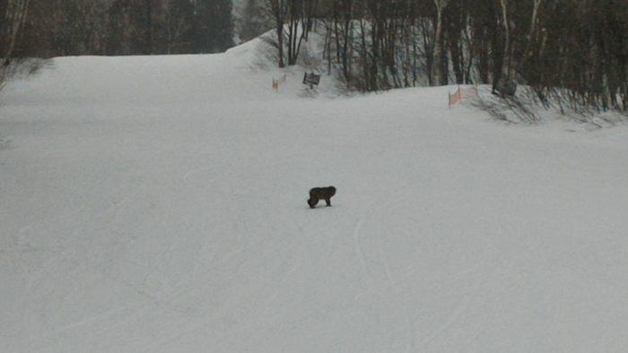 苗場スキー場で猿の親子