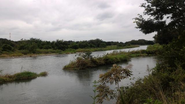 猿ヶ島辺りの相模川の溜まり(磯部の堰)