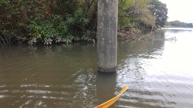 猿ヶ島辺りの相模川の溜まり(磯部の堰)をカヤックで探検、電信柱?!