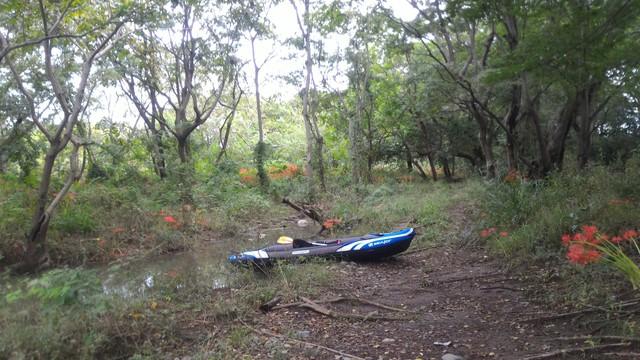 猿ヶ島辺りの相模川の溜まり(磯部の堰)の陸地に上陸