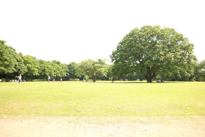 芹沢公園の芝生の広場