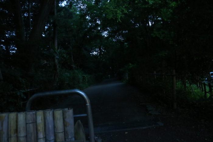 座間谷戸山公園に蛍鑑賞に来ました。