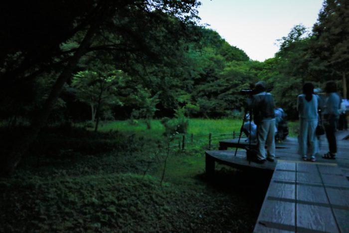 谷戸山公園に蛍鑑賞に来ました。