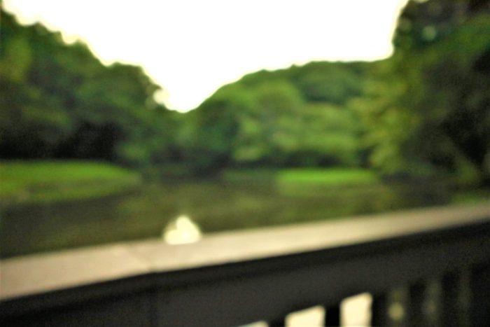 谷戸山公園に蛍鑑賞に来ました。水鳥の池