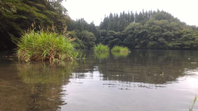 群馬県の四万湖でカヤック、浮島。