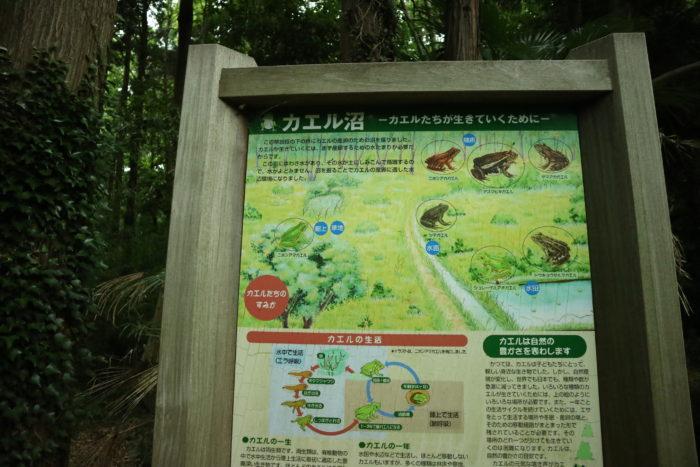 谷戸山公園のカエル沼