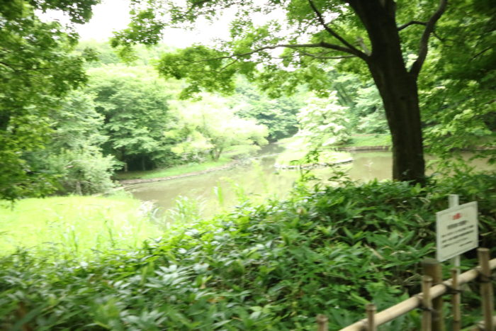 谷戸山公園の『水鳥の池』