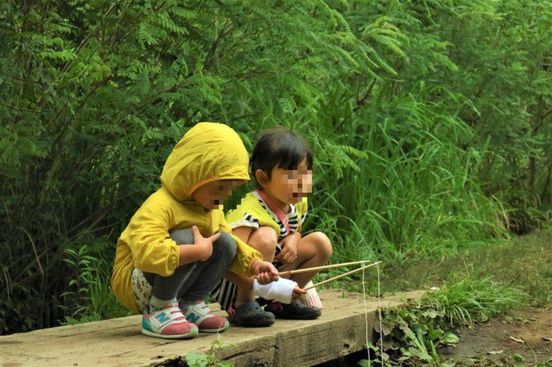 谷戸山公園に湿生生態園の脇の田んぼ用の用水路でザリガニ取り。