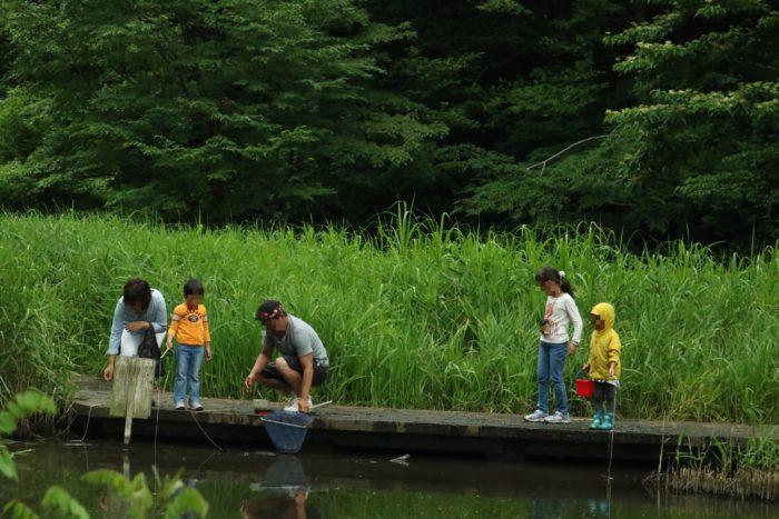 谷戸山公園に湿生生態園でザリガニ取り。