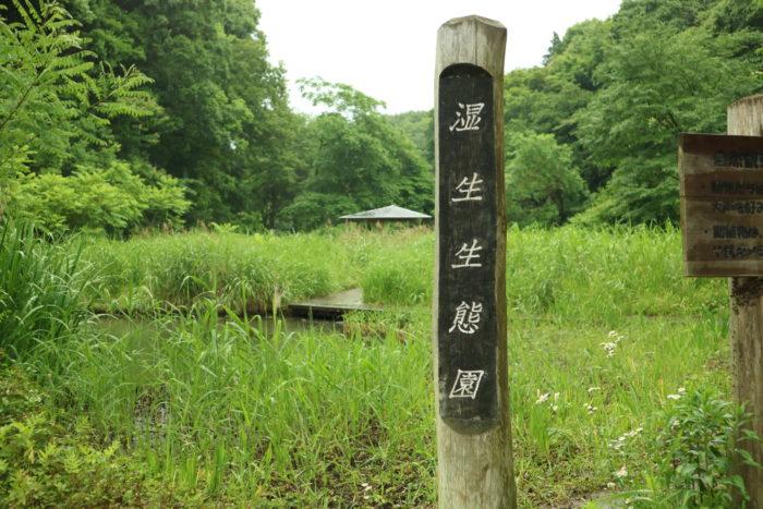谷戸山公園に湿生生態園