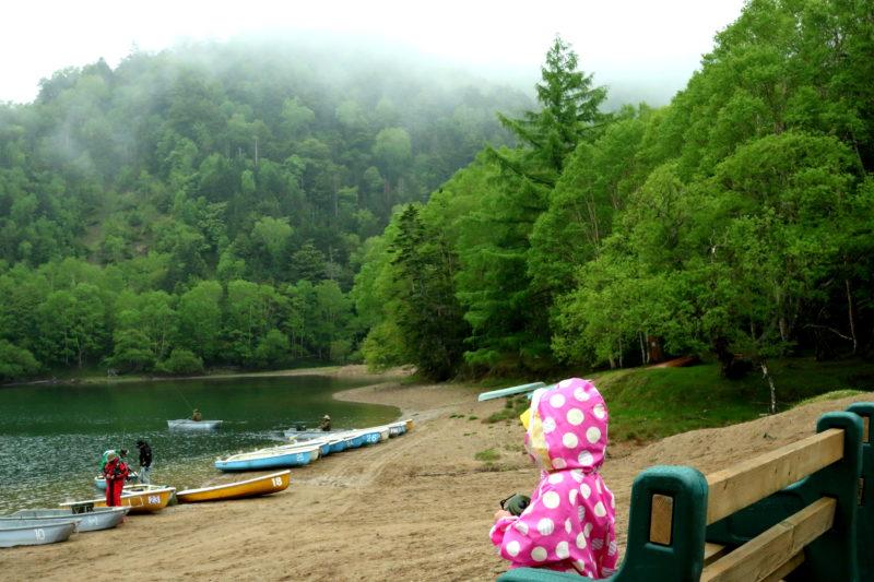 霧雨の菅沼キャンプ村を散策する、緑がとても綺麗です。