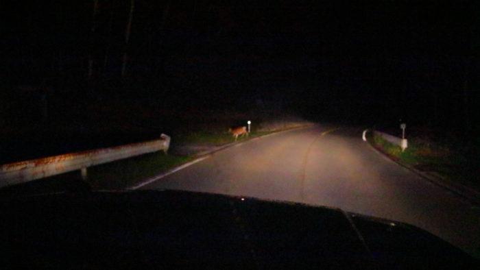 金精峠の鹿
