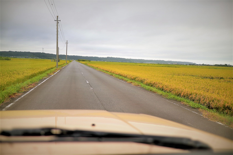 犬吠埼灯台で朝日を見た帰り道の田んぼ