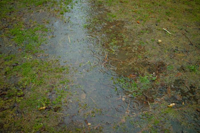 親沢公園キャンプ場で雨が降ってノースイーグルオクタゴンが濡れる