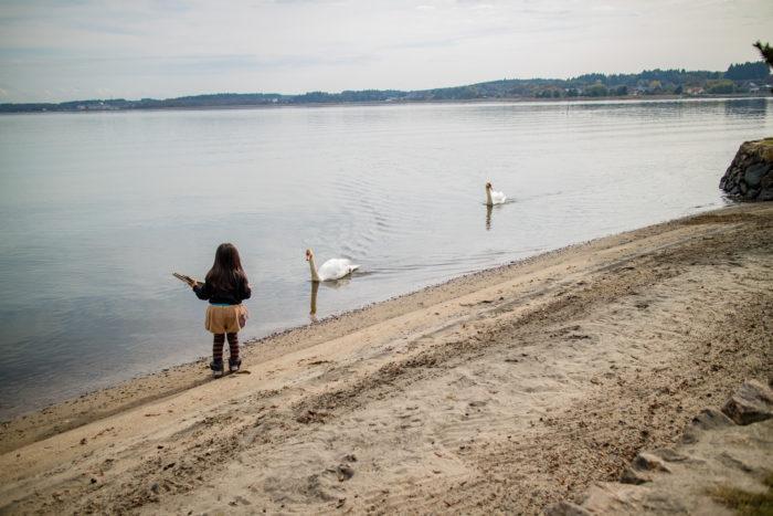 涸沼と白鳥と親沢公園キャンプ場