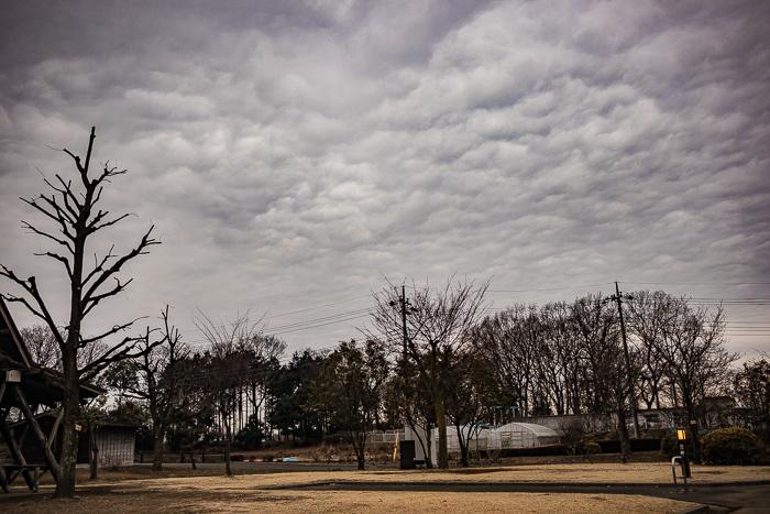 蔓巻公園オートキャンプ場の天気の悪い朝