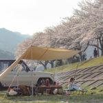 桜満開?!田代運動公園で花見デイキャンプ!