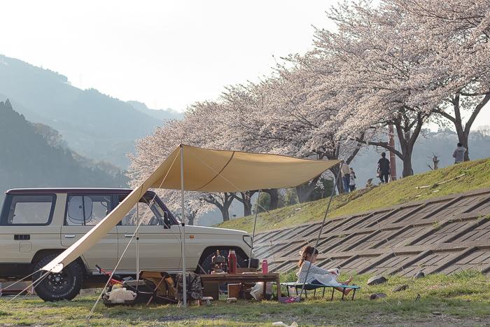 田代運動脇の河川敷で花見デイキャンプした時の桜並木