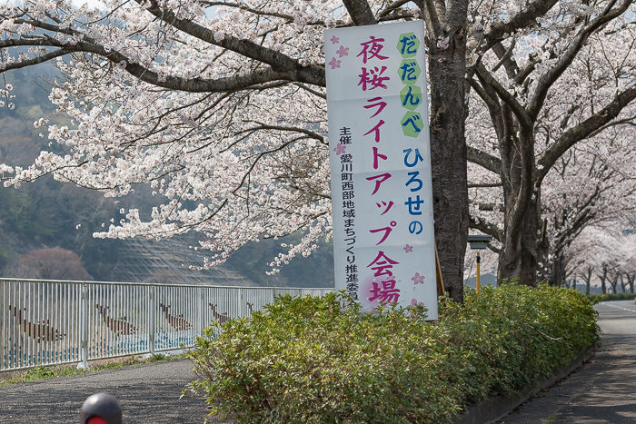 田代運動脇の河川敷で花見デイキャンプした時のだだんべひろせの夜桜ライトアップ会場の看板