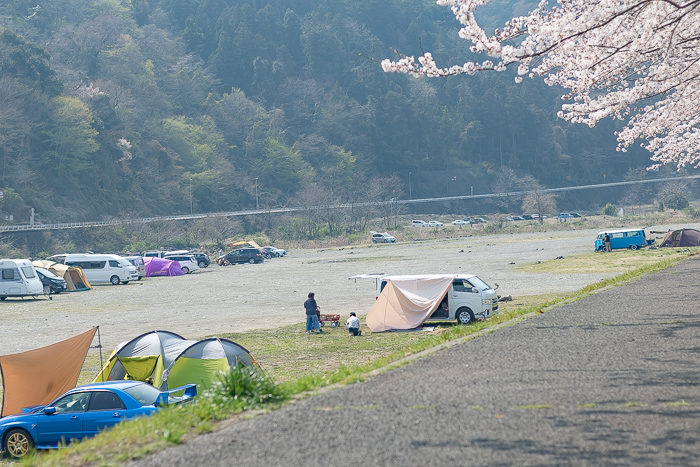 田代運動脇の河川敷で花見デイキャンプ