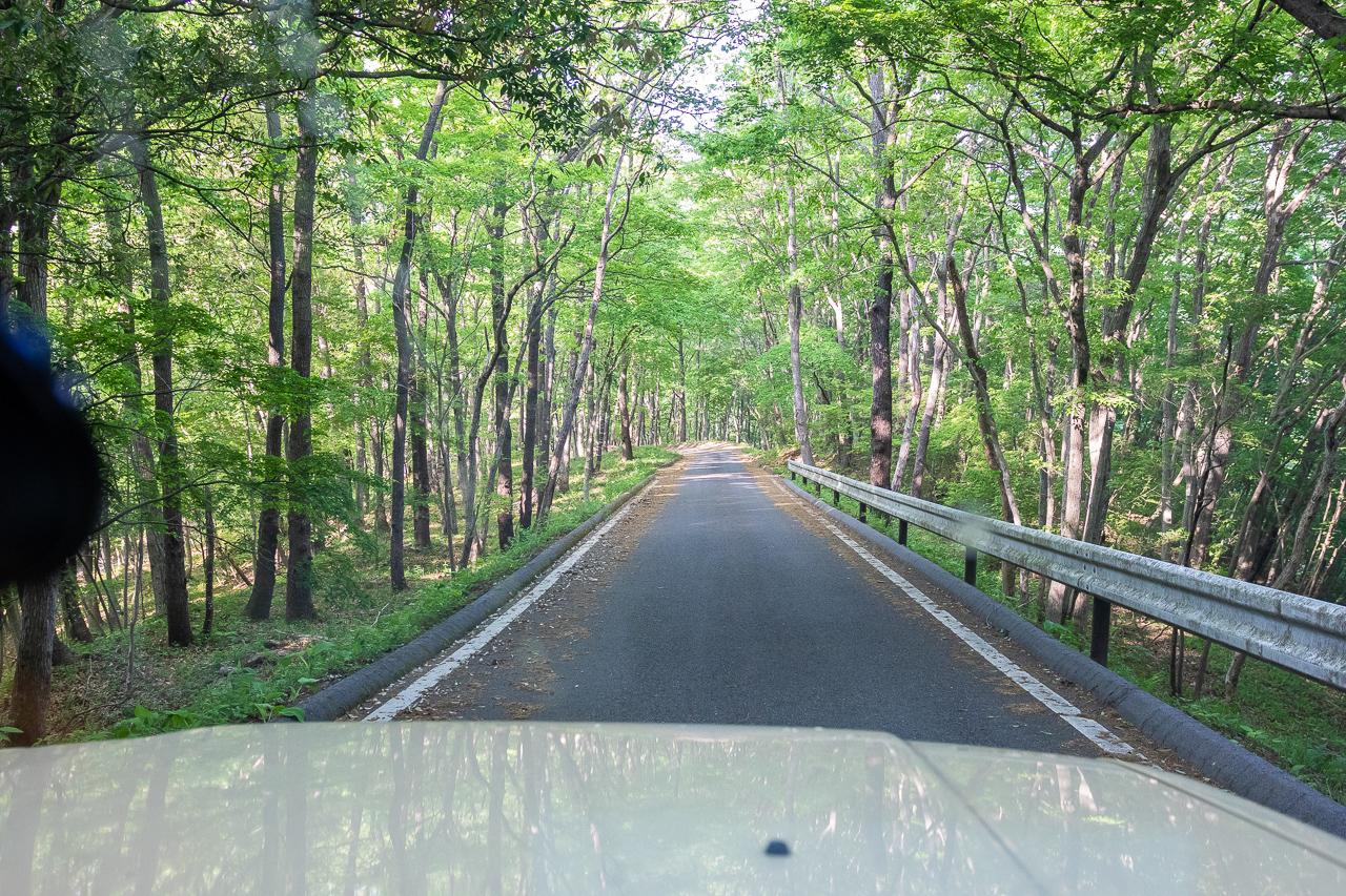 鎌倉山展望台へ向かう林道