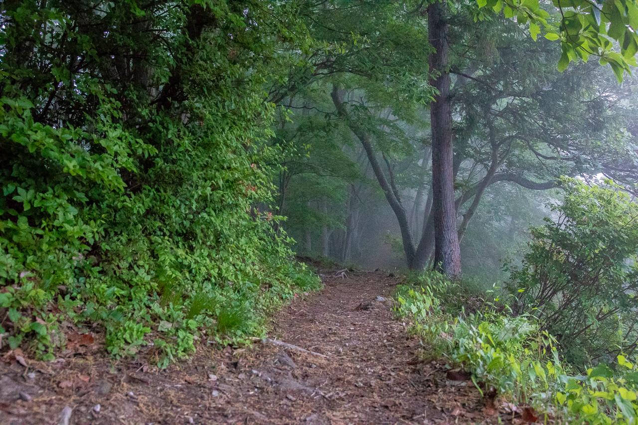 霧の中の鎌倉山展望台へ向かう途中の山道