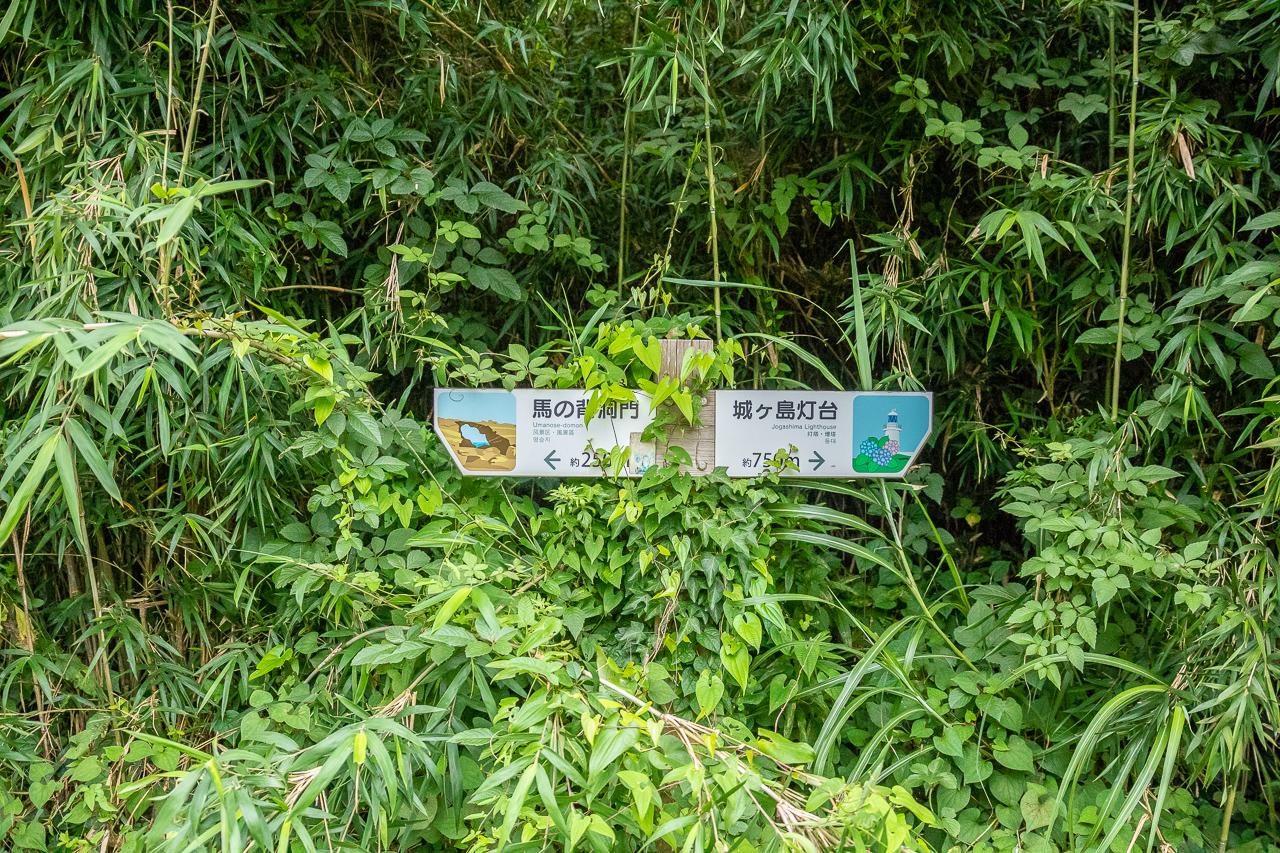 三浦半島の馬の背洞門までの山道(ハイキングコース)