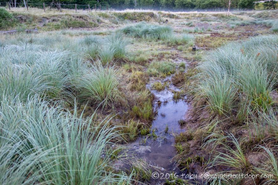 菅沼の朝の湿原