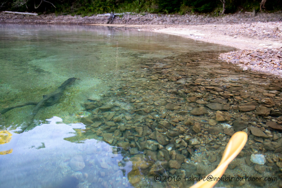 早朝の水の澄んだ菅沼
