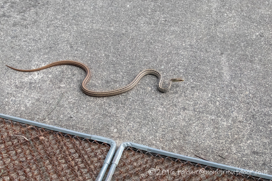富士山YMCAで見た蛇