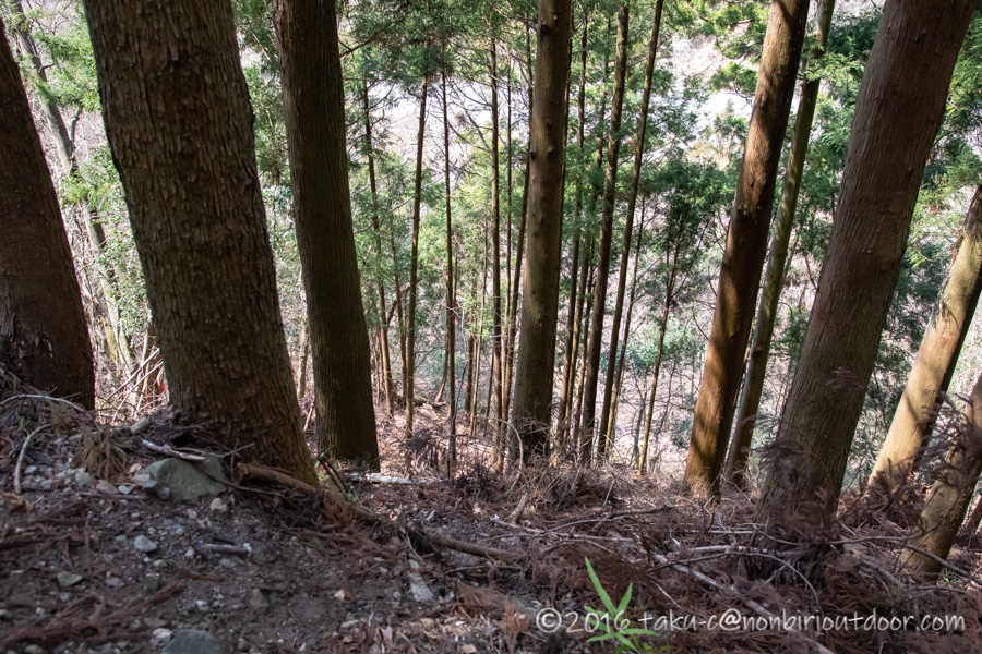 某県某所の野営地の林道からの眺め