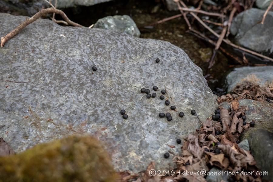 某県某所の野営地で鹿の糞
