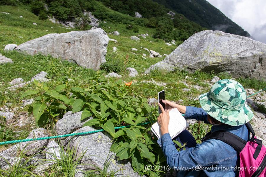 千畳敷カールで高山植物を紹介するツアーに参加