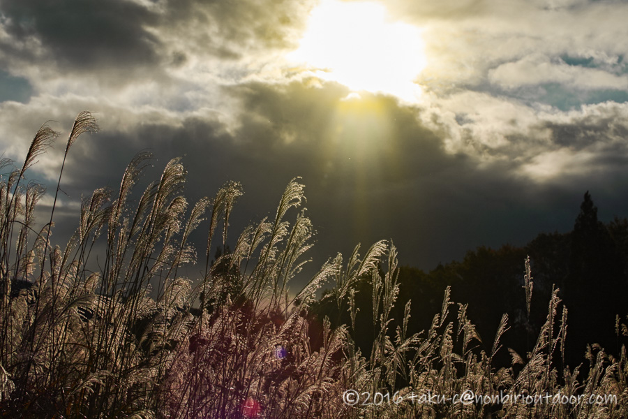 第3回ナチュログ写真部合宿の朝日とすすき
