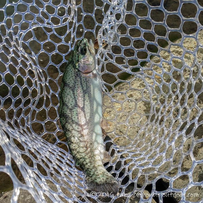 2021年1月27日の冬のFF中津川で釣れたニジマス