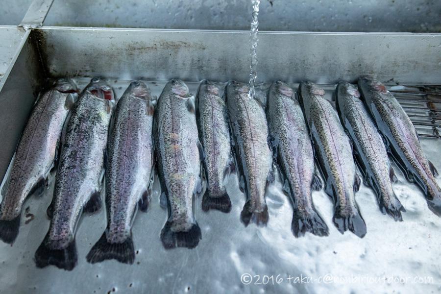 2021年1月20日のFF中津川で釣れたニジマス