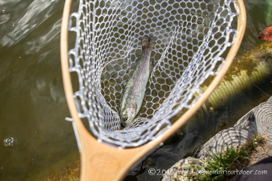 2021年2月17日のFish on 王禅寺のジロー池で釣れたニジマス