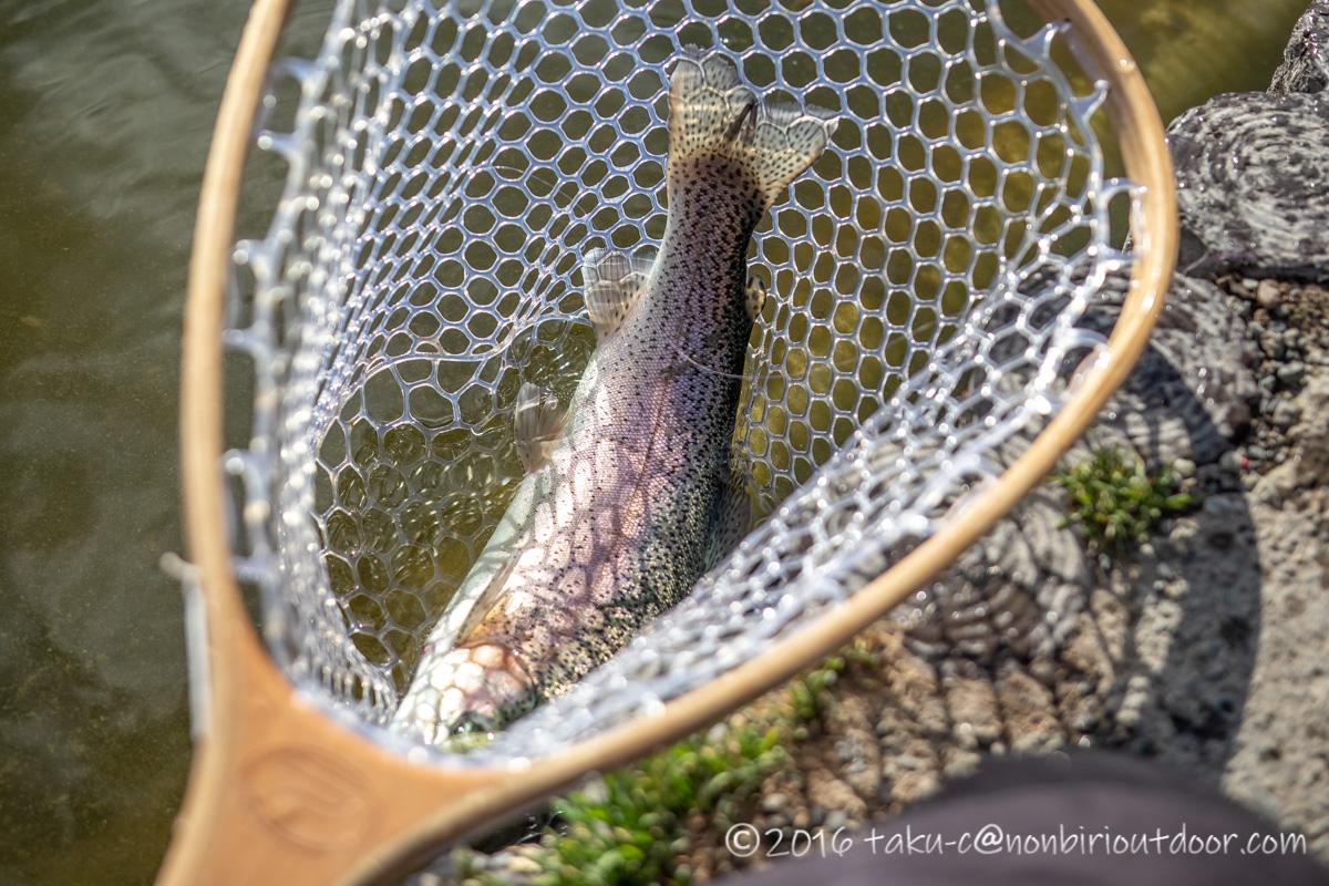 2021年2月17日のFish on 王禅寺のジロー池の午後に釣れたニジマス