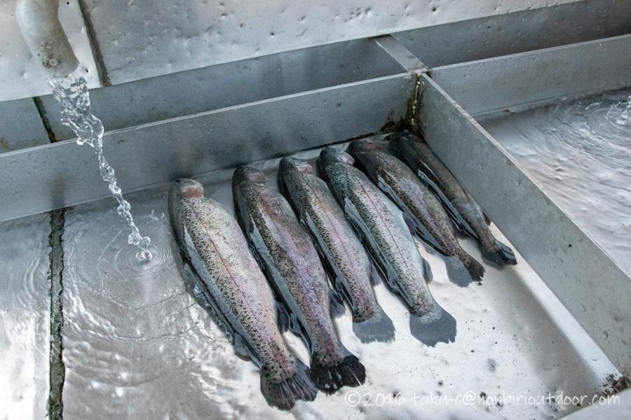 フィッシングフィールド中津川での3月10日の釣果