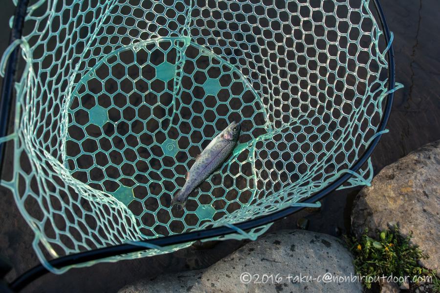 2021年3月17日のフィッシングフィールド中津川にてスプーンで釣れたニジマス