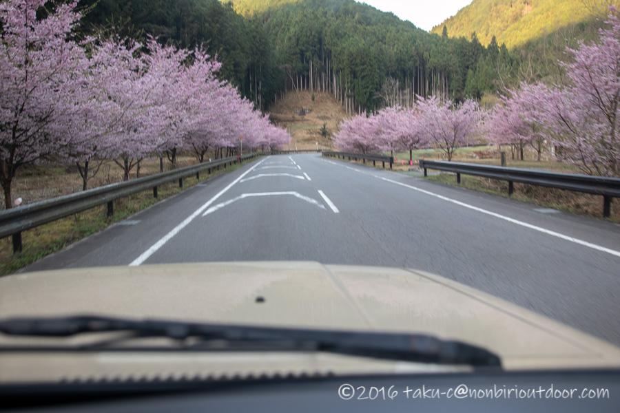 アウトドアビィレッジ発光路の森フィッシングエリアに向かう途中の道の桜
