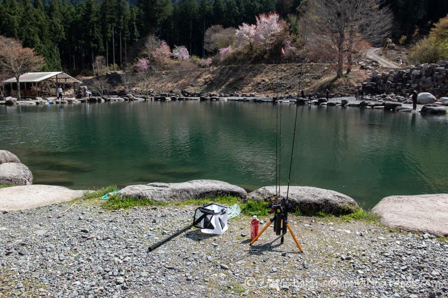 アウトドアビィレッジ発光路の森フィッシングエリアの1号池でのニジマス釣り