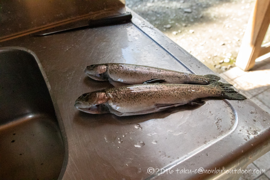アウトドアビィレッジ発光路の森フィッシングエリアで釣れたニジマス