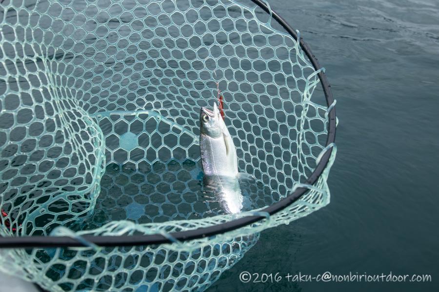 2021年06月02日の芦ノ湖でカヤック(フジタカヌー)からのジギングでヒメマスが釣れた
